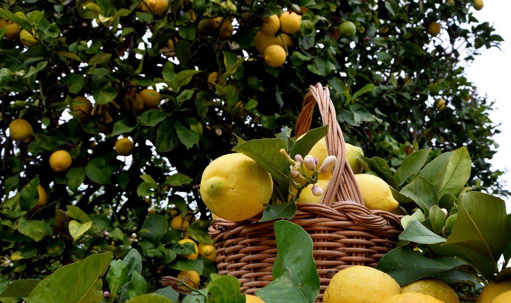 Zitronenkorb